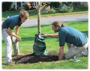 Garth-garden-care